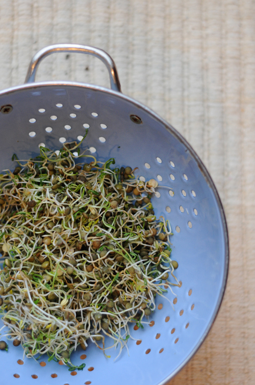 Make-your-own-lentil-sprouts-2