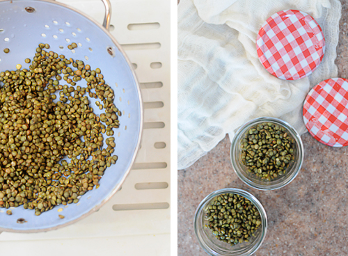Make-your-own-lentil-sprouts-3